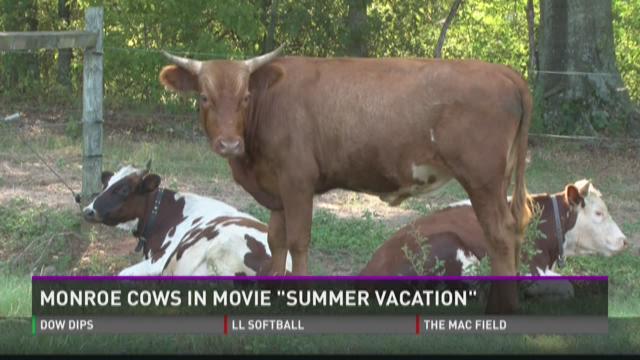 Monroe cows in movie 'Vacation'
